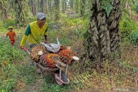 Le régent de Musi Banyuasin a discuté du développement de l'huile de palme durable aux Pays-Bas